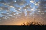 Mur et buisson devant un coucher de soleil