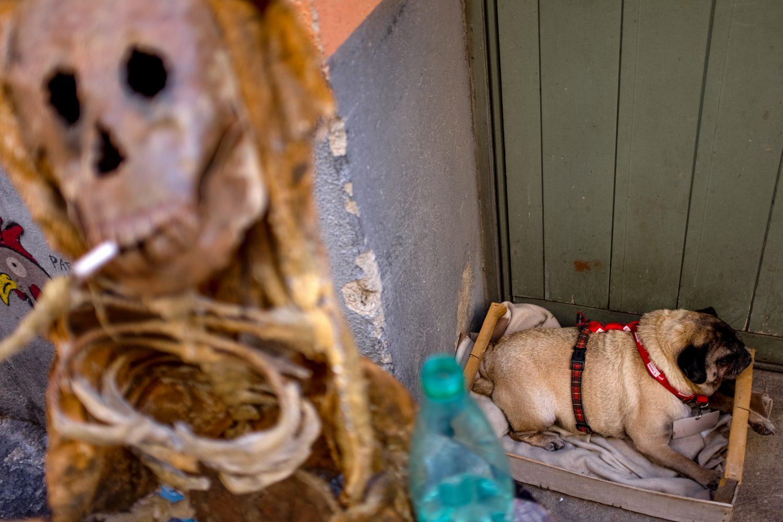 Un chien dans un cageot, accompagné d'un squelette fumant une cigarette