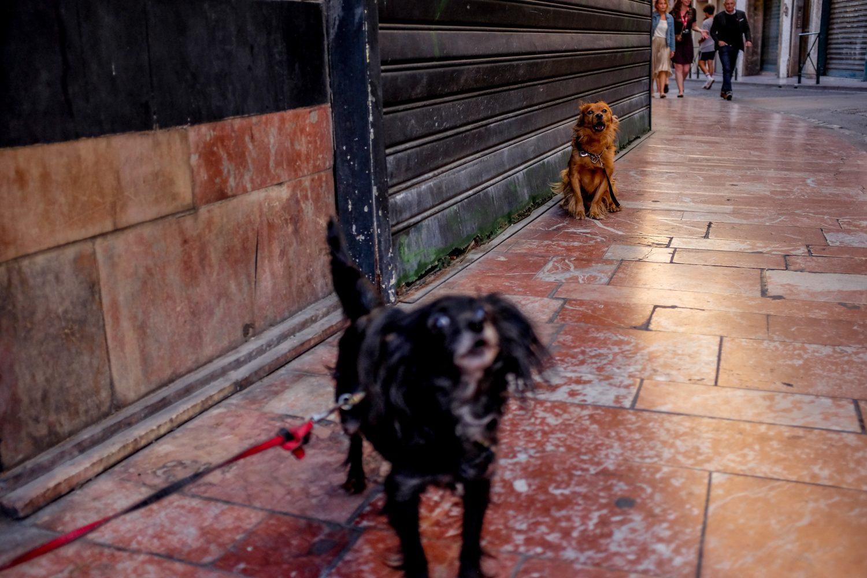 Des chiens aboient dans les rues de Perpignan